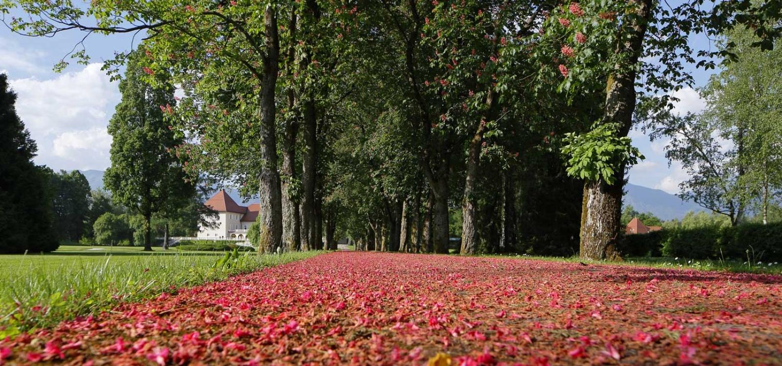 Red leafs in Brdo