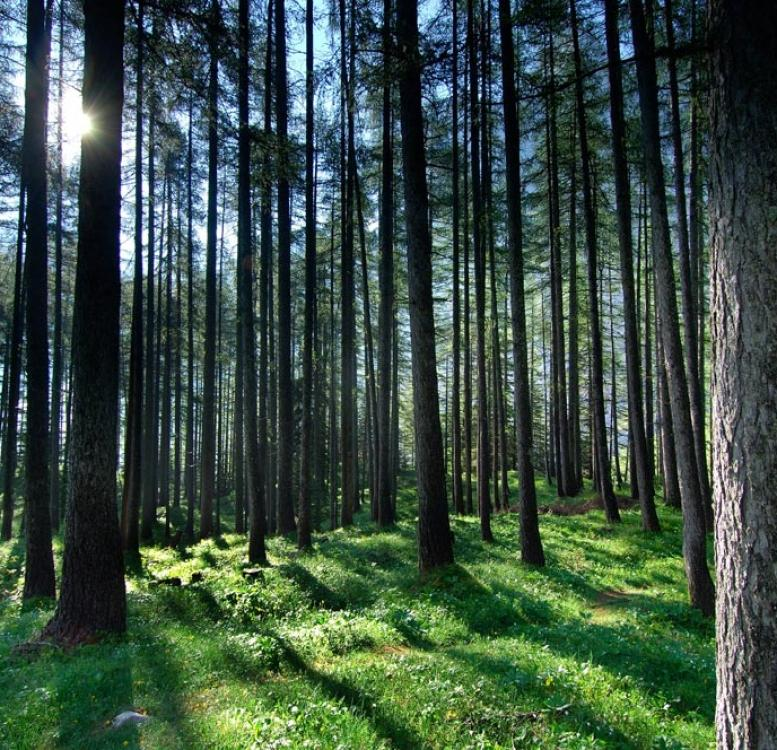 Slovenia - forest with light shining on the green grass